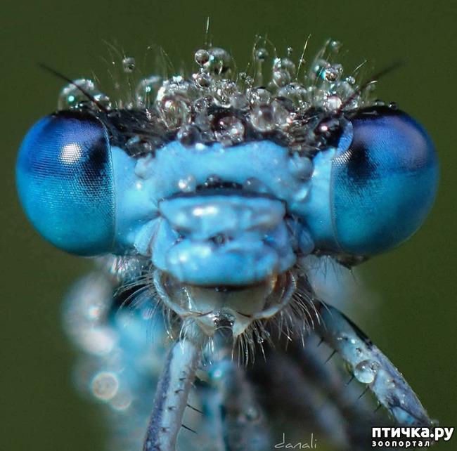 фото 15: Микроужас или красота симметрии!