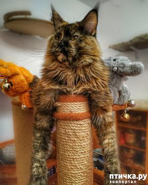 фото: Смешные котики и все остальные