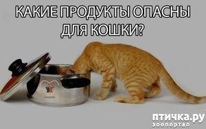 фото: Продукты противопоказанные кошкам [ответственному владельцу на заметку]