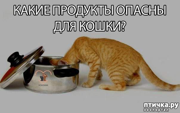 фото 1: Продукты противопоказанные кошкам [ответственному владельцу на заметку]