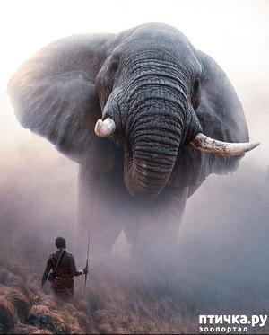 фото: Слоны