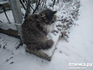 фото: Первый снег для Пуши