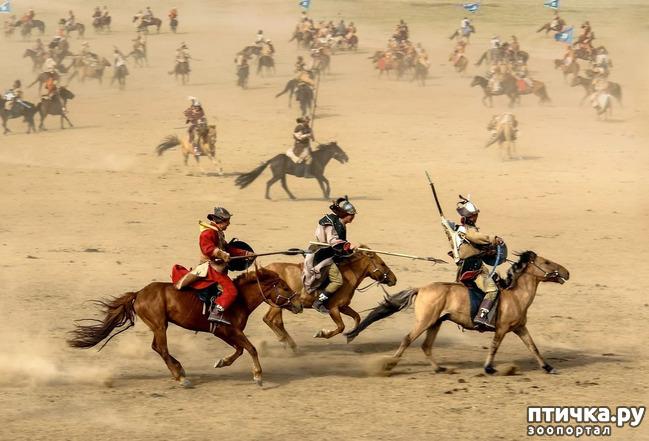 фото 6: О монгольской лошади.
