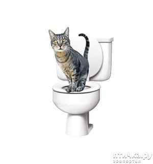 фото: Запоры у кошки