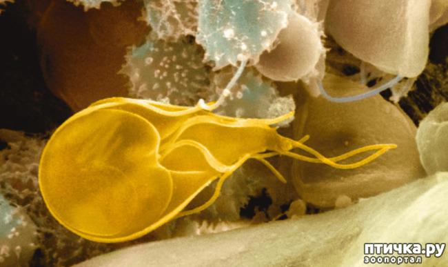 фото 4: Пищеварение, глисты и простейшие