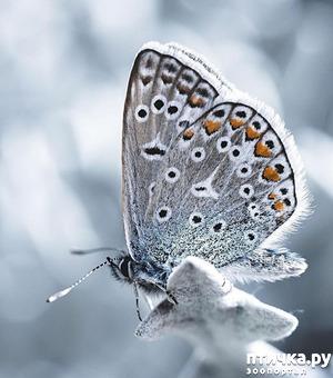 фото: Крылатая красота