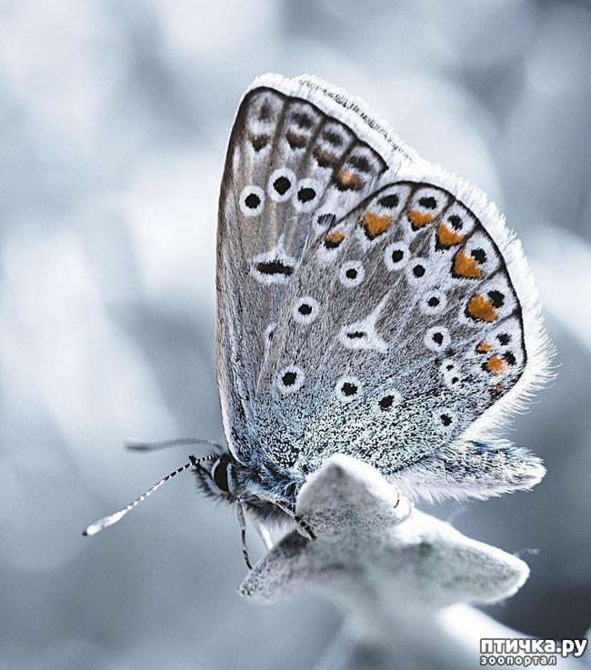 фото 1: Крылатая красота