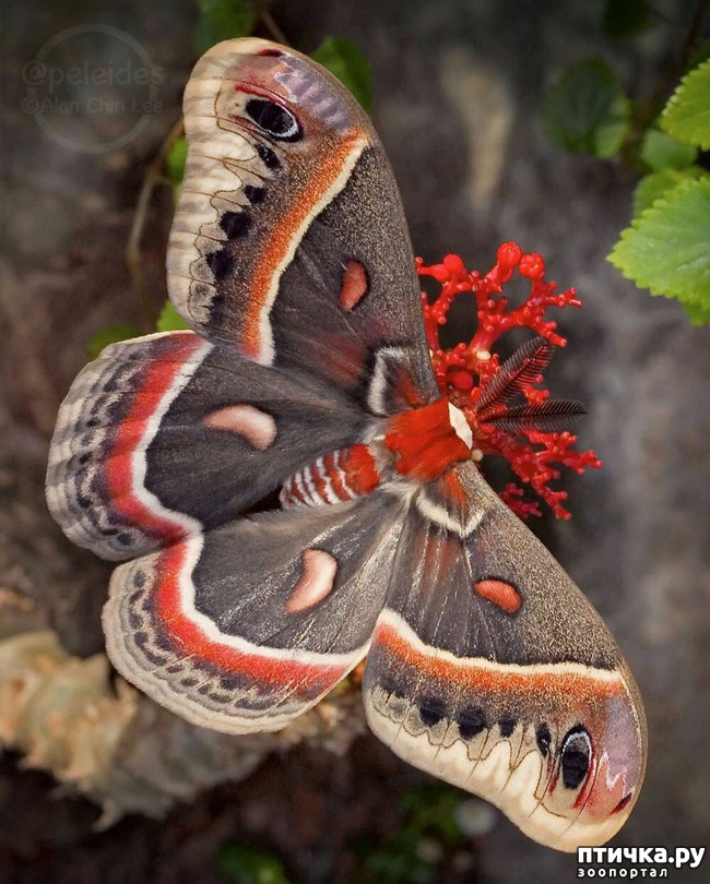 фото 4: Крылатая красота
