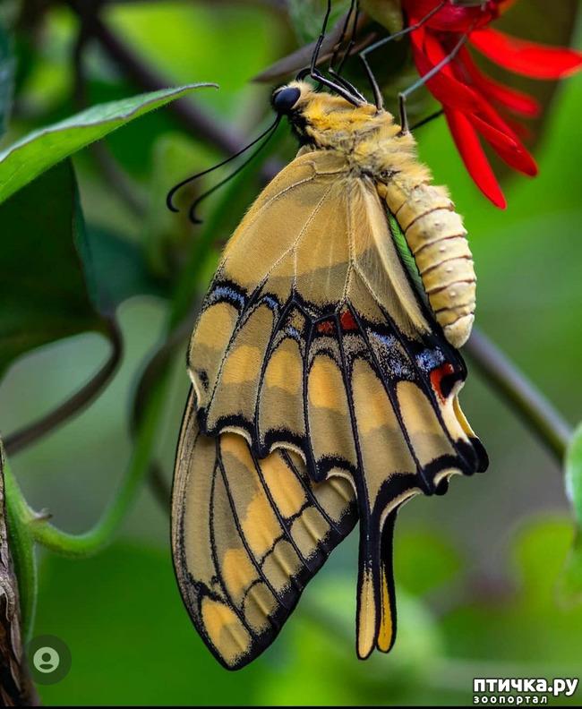 фото 13: Крылатая красота