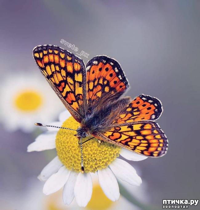 фото 15: Крылатая красота