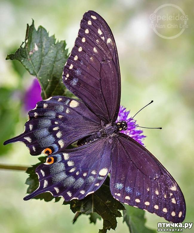 фото 23: Крылатая красота