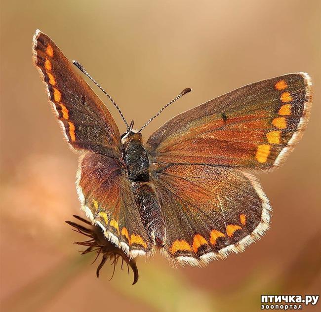 фото 25: Крылатая красота