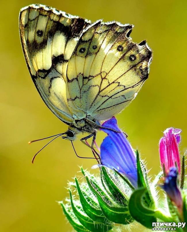 фото 30: Крылатая красота