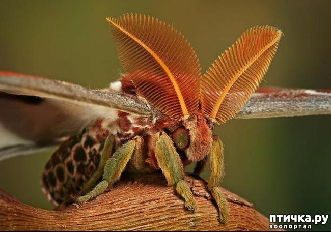 фото 41: Крылатая красота