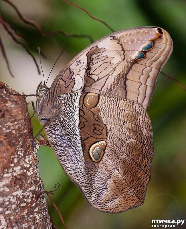 фото 45: Крылатая красота
