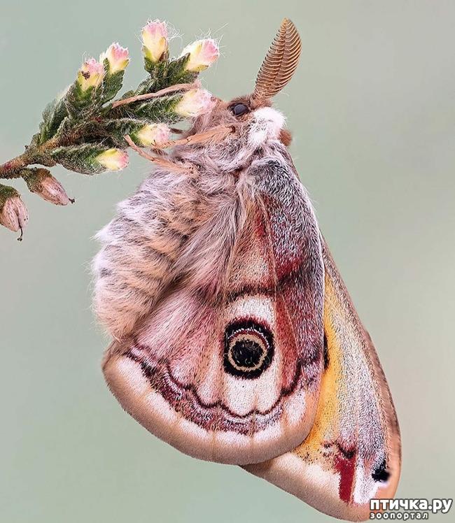 фото 47: Крылатая красота