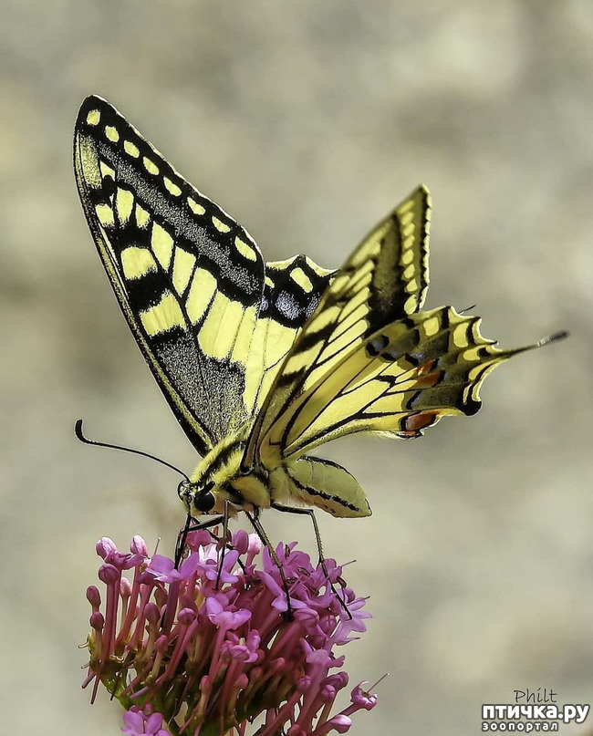 фото 49: Крылатая красота