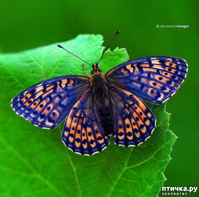 фото 50: Крылатая красота