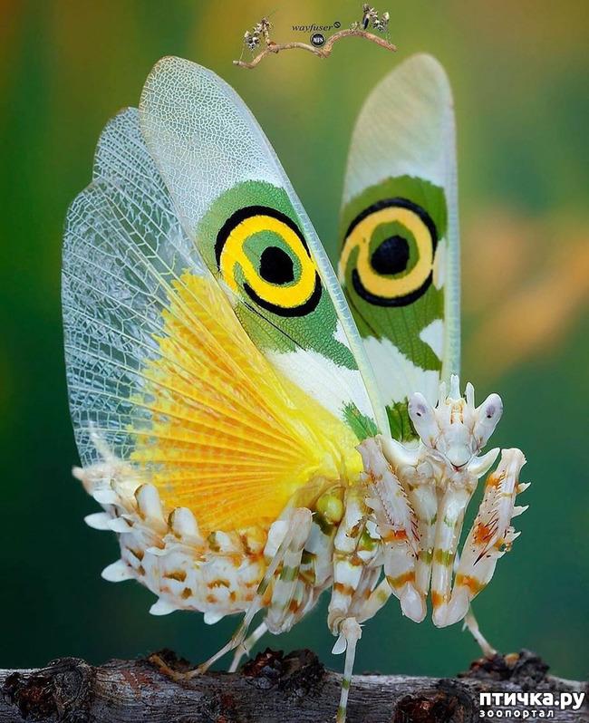 фото 52: Крылатая красота