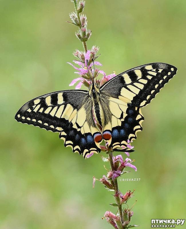 фото 51: Крылатая красота