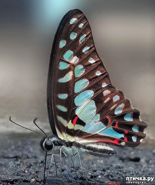 фото 55: Крылатая красота