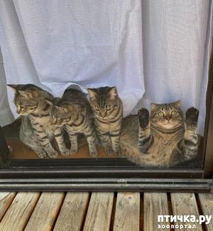 фото: Без кота жизнь не та!