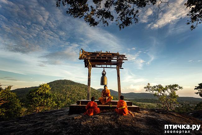 фото 1: Медитация на