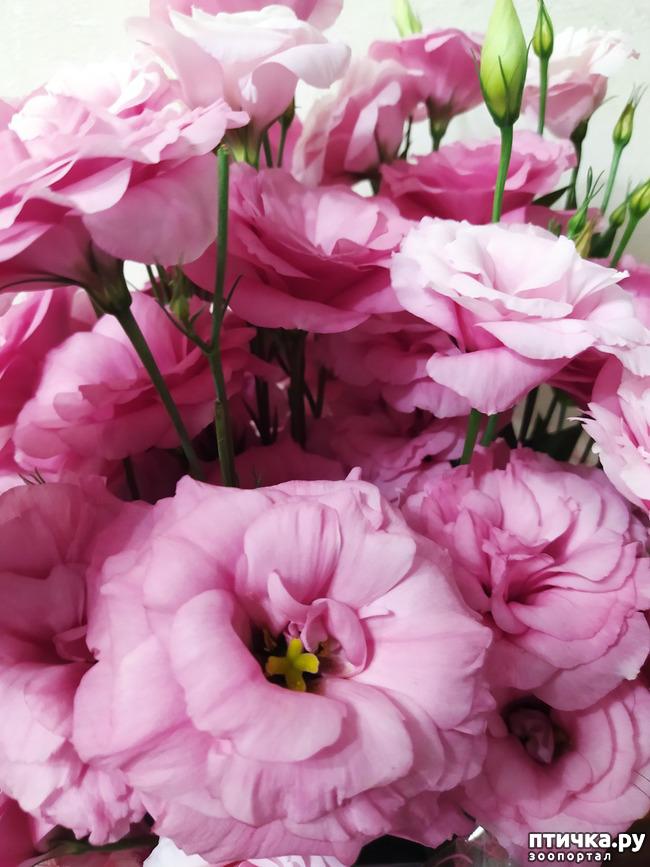фото 1: И снова цветочки