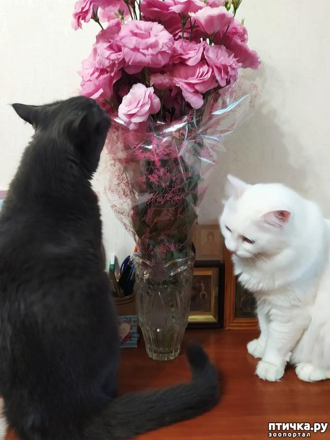фото 2: И снова цветочки