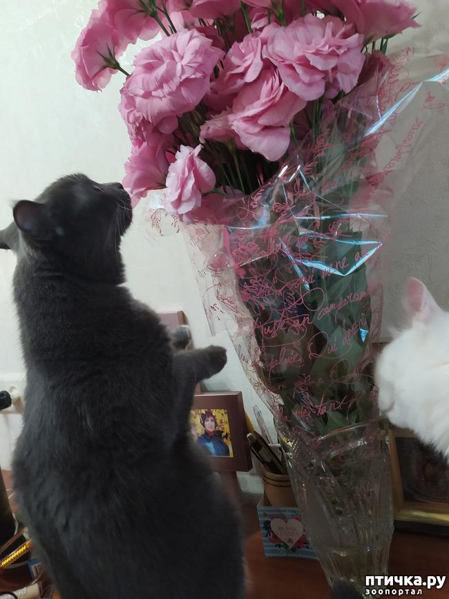 фото 3: И снова цветочки