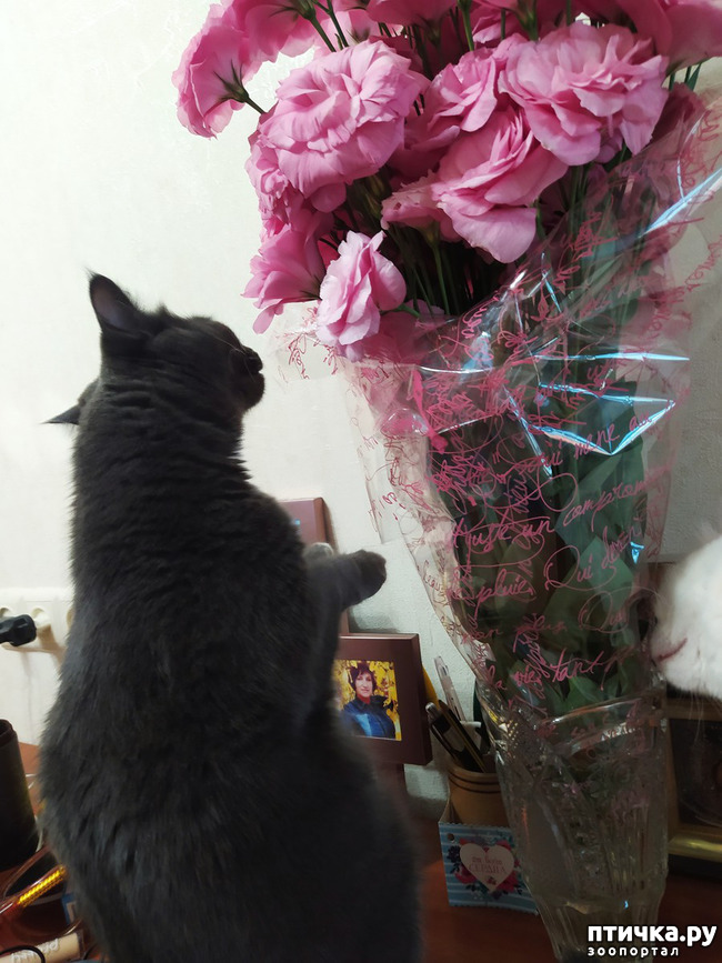 фото 4: И снова цветочки