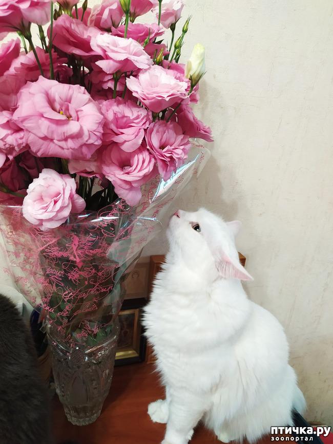 фото 12: И снова цветочки