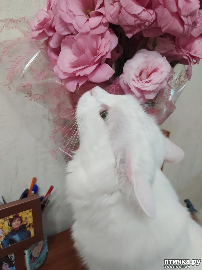 фото 9: И снова цветочки