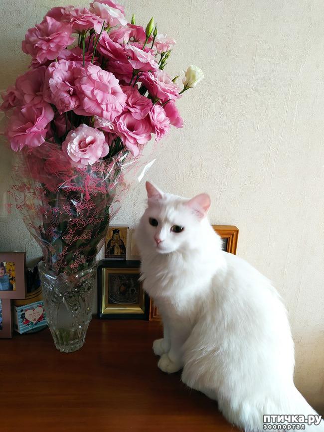 фото 13: И снова цветочки