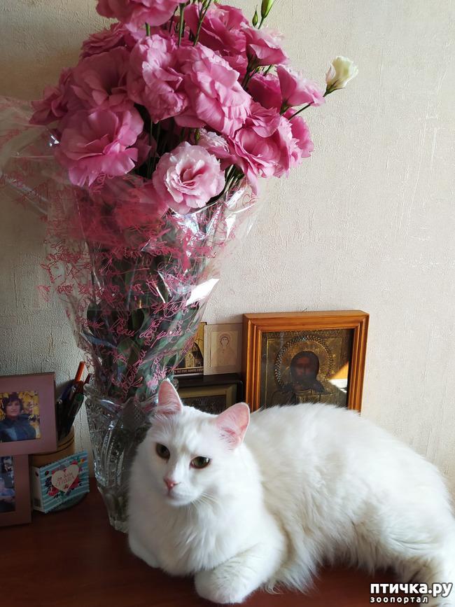 фото 14: И снова цветочки