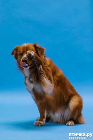 фото: Чем ещё чревато отпускать собак на самовыгул?