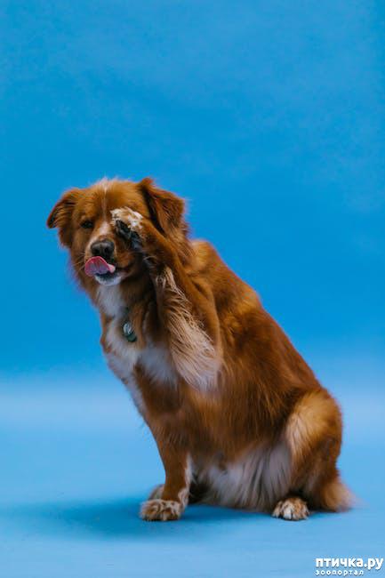 фото 1: Чем ещё чревато отпускать собак на самовыгул?