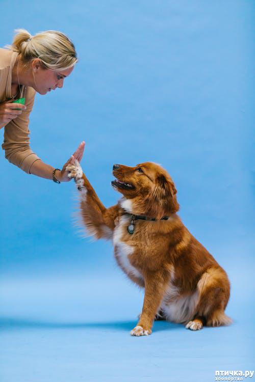 фото 2: Чем ещё чревато отпускать собак на самовыгул?