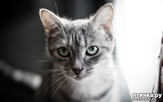 фото 2: У кошки новый дом в новом городе.
