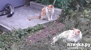 фото: Жароустойчивые кошки