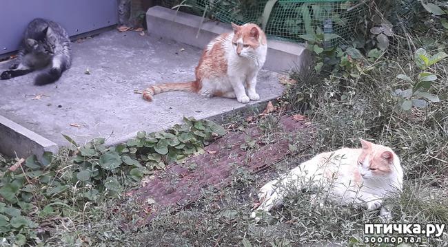 фото 1: Жароустойчивые кошки