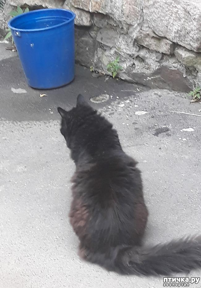 фото 3: Жароустойчивые кошки