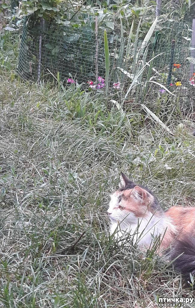 фото 4: Жароустойчивые кошки
