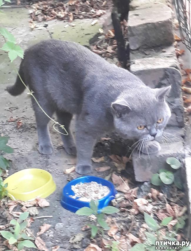 фото 5: Жароустойчивые кошки