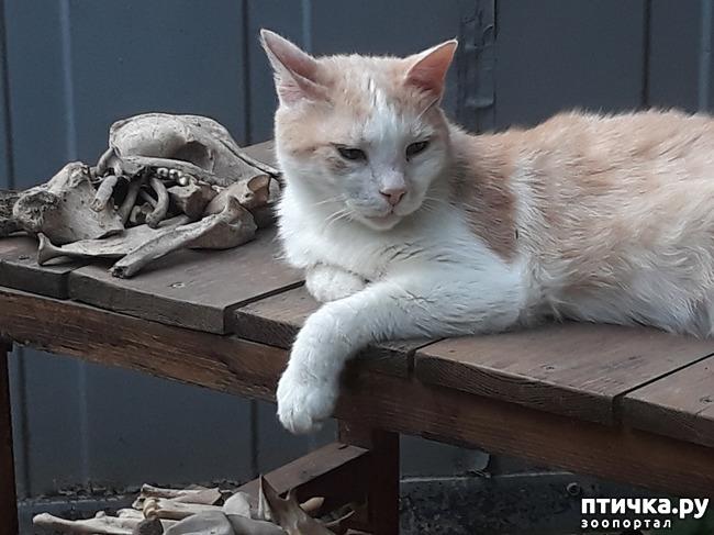 фото 8: Жароустойчивые кошки