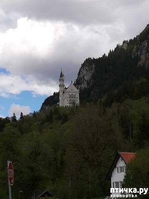 фото: Прогулка по Альпзее и окрестностям Нойшванштайн.