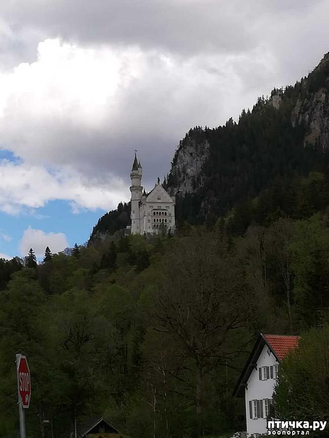 фото 1: Прогулка по Альпзее и окрестностям Нойшванштайн.