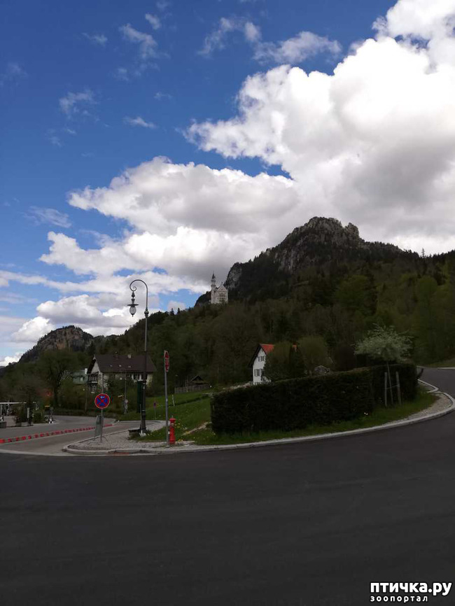 фото 3: Прогулка по Альпзее и окрестностям Нойшванштайн.