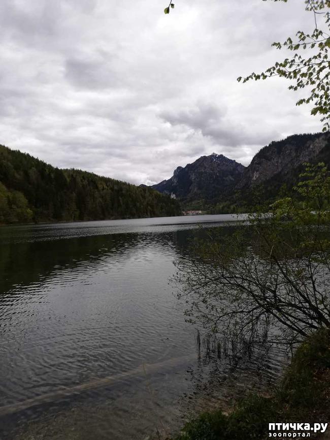 фото 5: Прогулка по Альпзее и окрестностям Нойшванштайн.