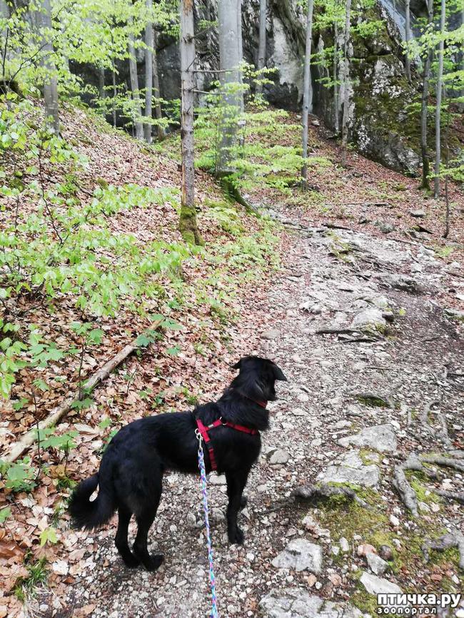 фото 6: Прогулка по Альпзее и окрестностям Нойшванштайн.